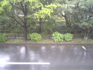 after_rain.JPG